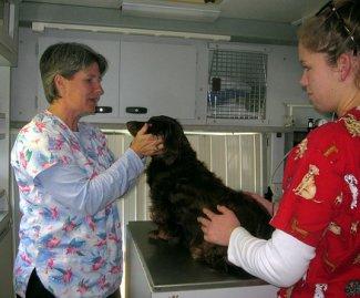 Veterinary Technician Schools & Vet Tech Degree Programs